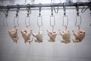 poultry sanitation software